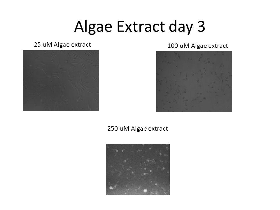 25 uM Algae extract 100 uM Algae extract 250 uM Algae extract Algae Extract day 3