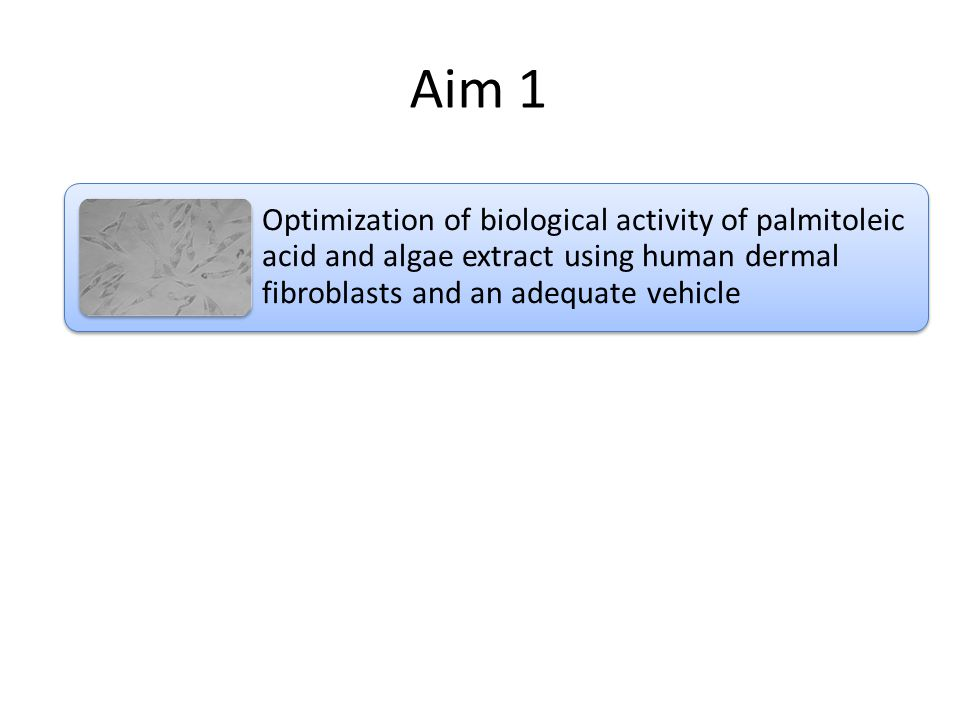 Aim 1 Optimization of biological activity of palmitoleic acid and algae extract using human dermal fibroblasts and an adequate vehicle Develop a protocol to look at internalization of lipids within cells Compare differences between palmitoleic acid and algae extract