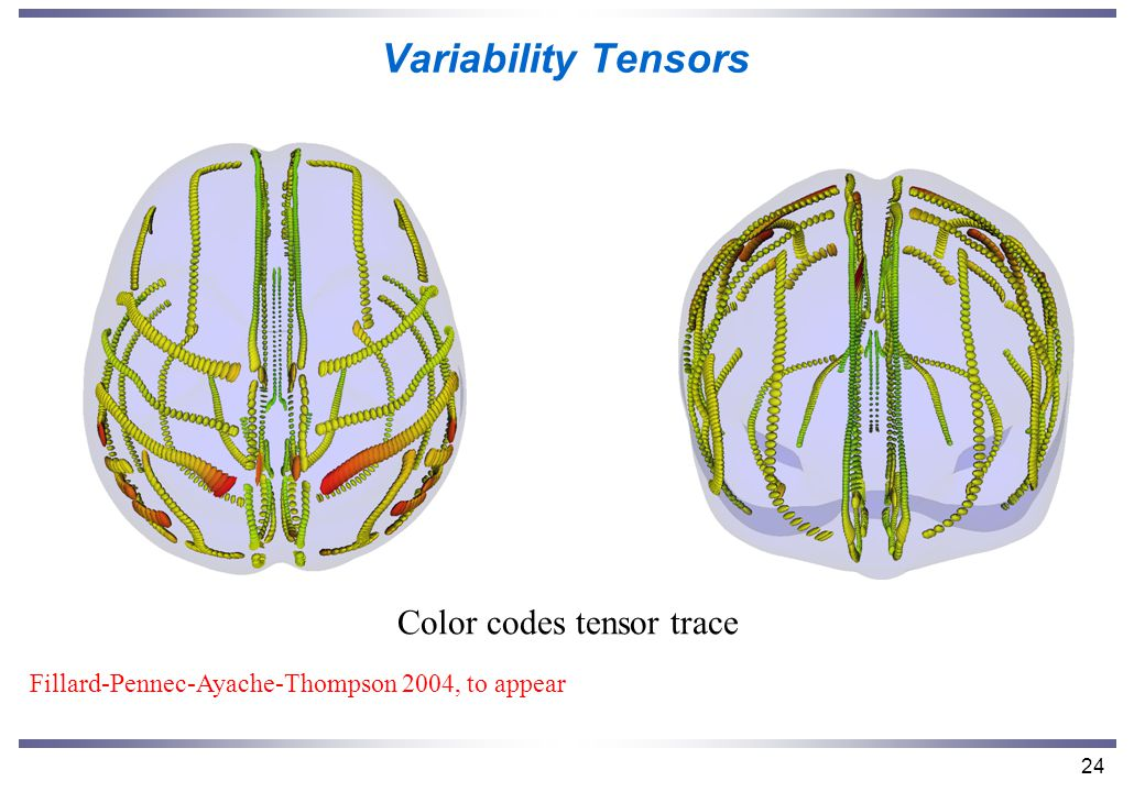 24 Variability Tensors Color codes tensor trace Fillard-Pennec-Ayache-Thompson 2004, to appear