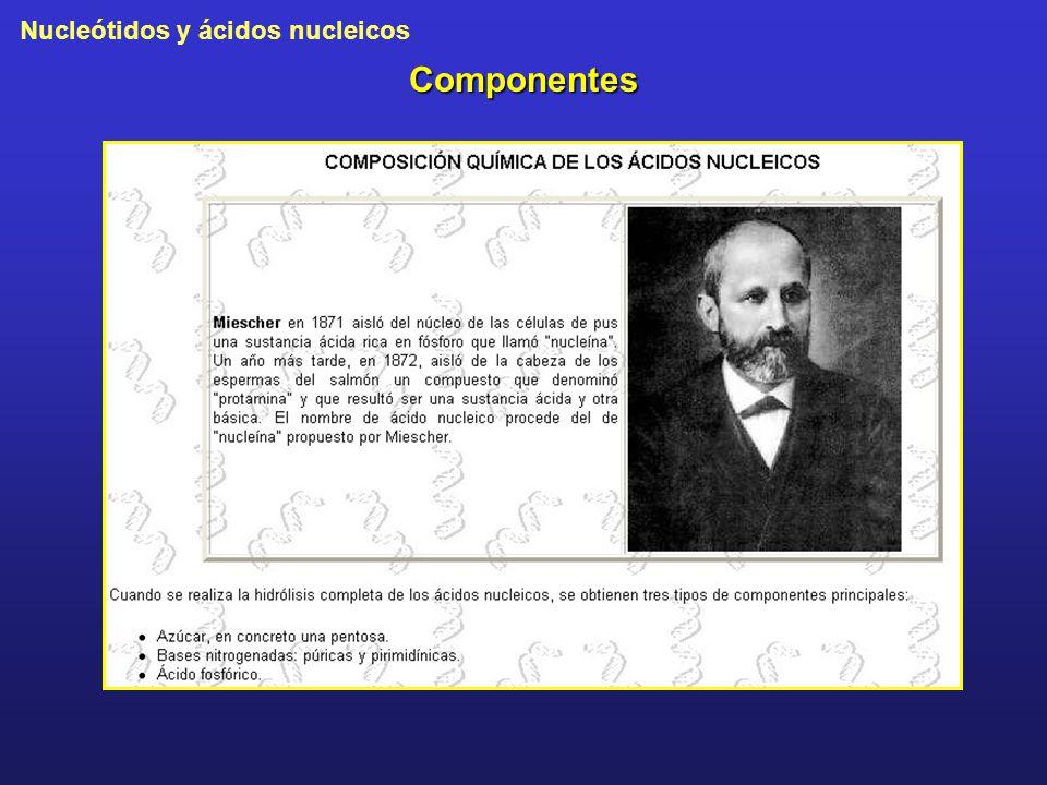 Nucleótidos y ácidos nucleicos Componentes
