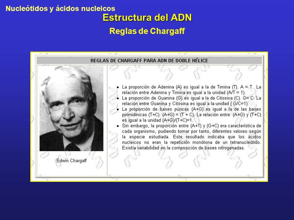 Nucleótidos y ácidos nucleicos Estructura del ADN Reglas de Chargaff