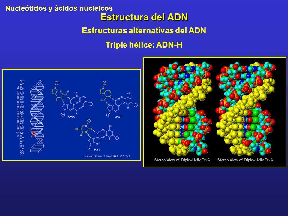 Nucleótidos y ácidos nucleicos Estructura del ADN Estructuras alternativas del ADN Triple hélice: ADN-H