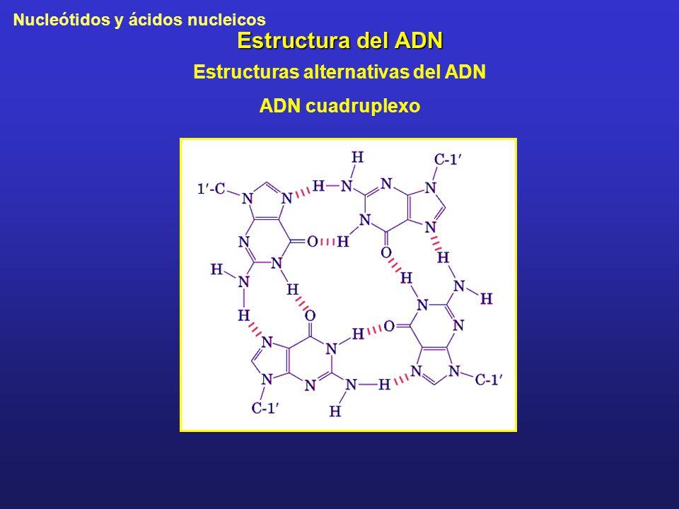 Nucleótidos y ácidos nucleicos Estructura del ADN Estructuras alternativas del ADN ADN cuadruplexo