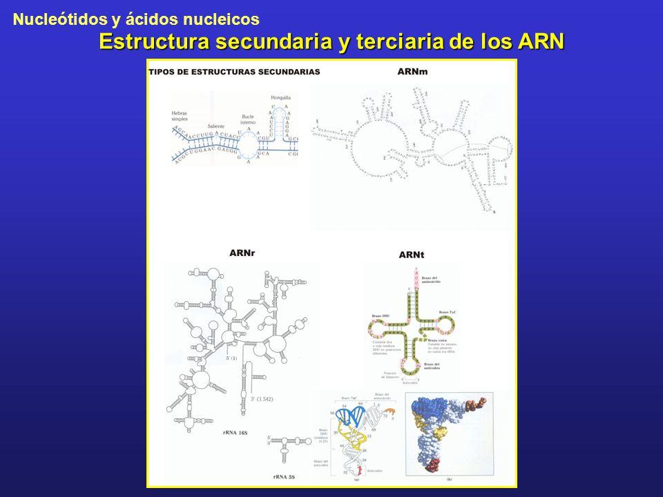 Nucleótidos y ácidos nucleicos Estructura secundaria y terciaria de los ARN