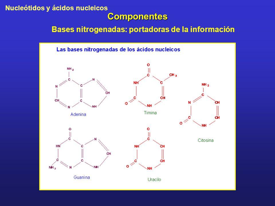 Componentes Bases nitrogenadas: portadoras de la información