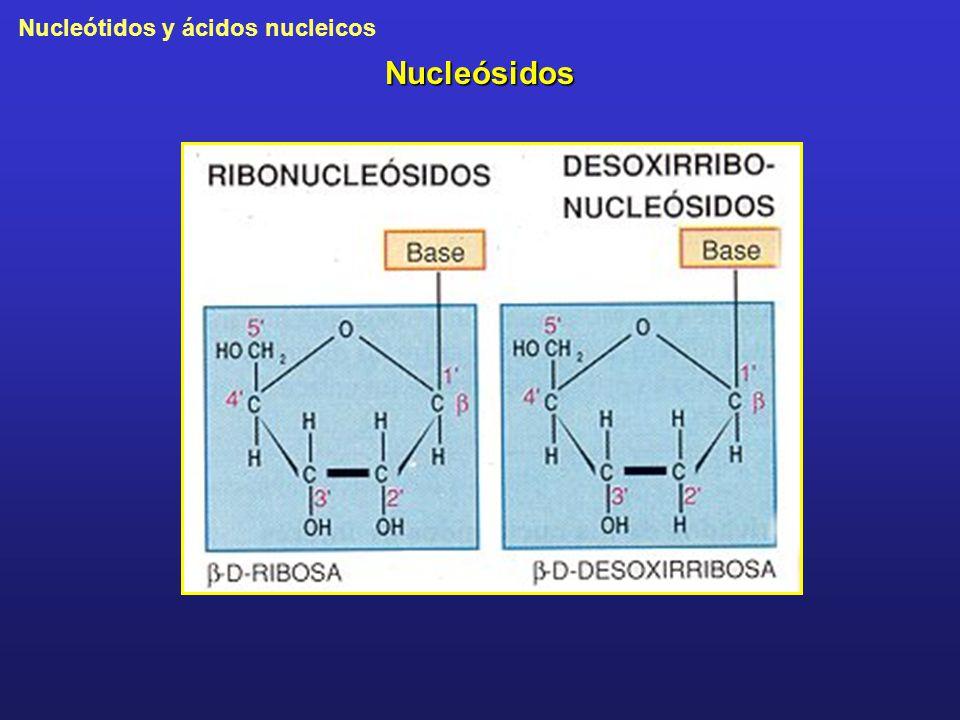 Nucleótidos y ácidos nucleicos Nucleósidos