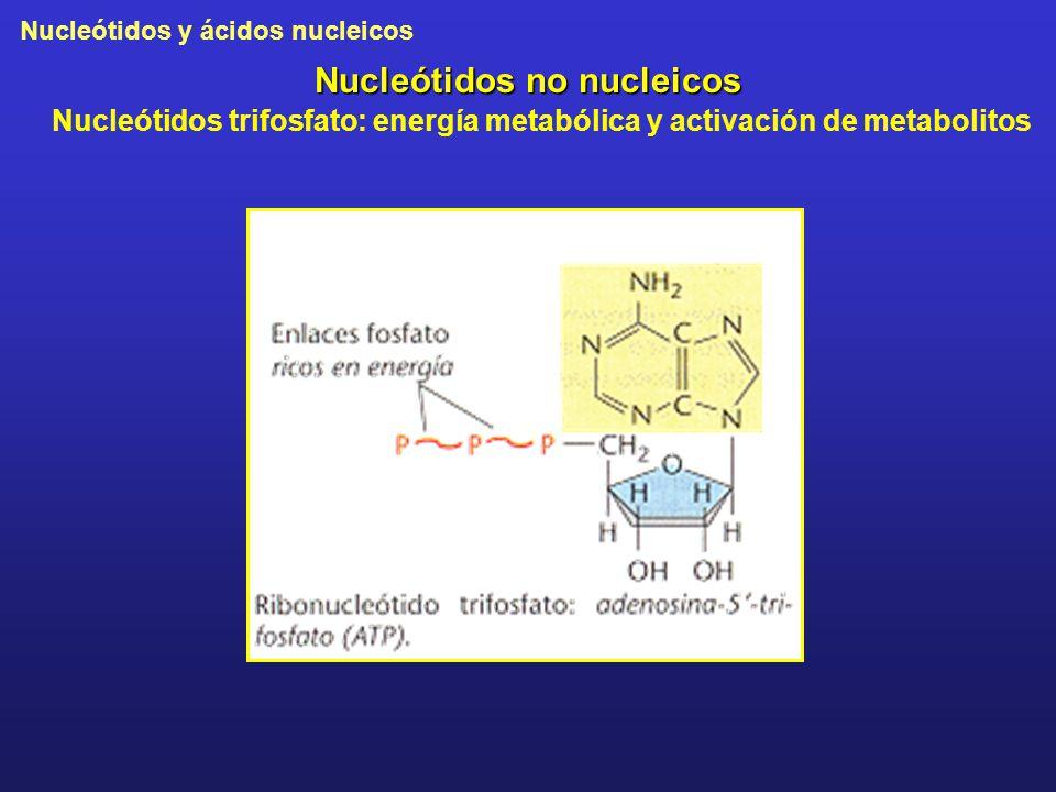 Nucleótidos y ácidos nucleicos Nucleótidos no nucleicos Nucleótidos trifosfato: energía metabólica y activación de metabolitos
