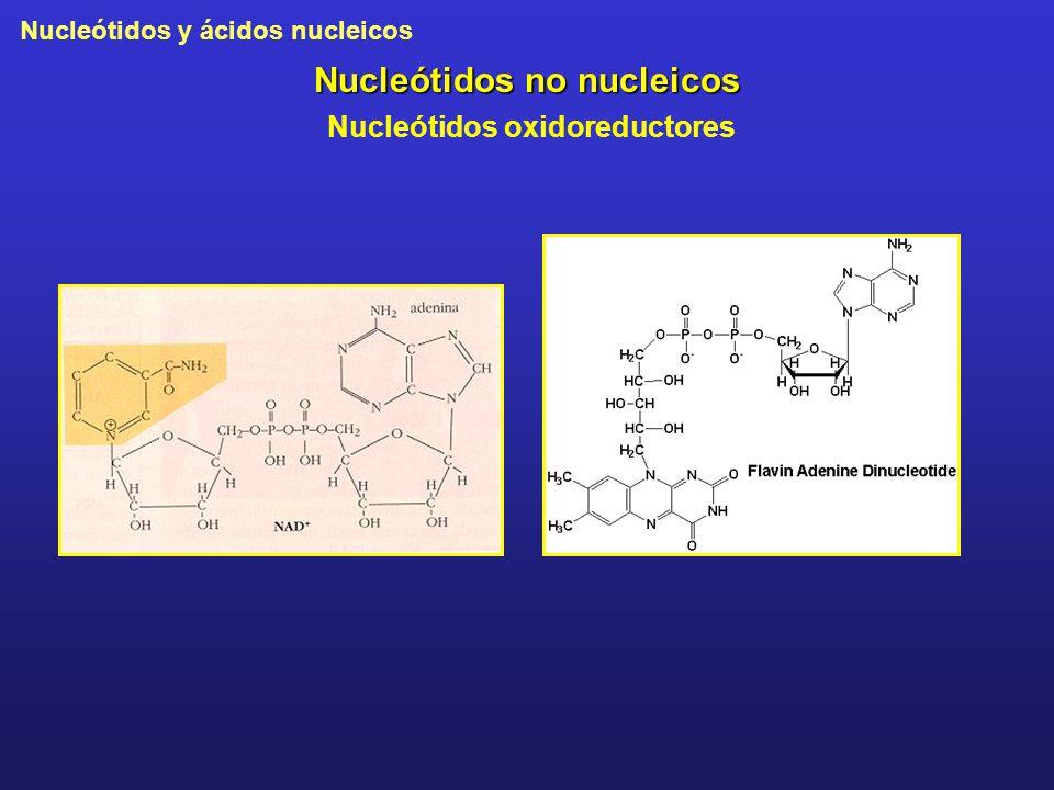 Nucleótidos y ácidos nucleicos Nucleótidos no nucleicos Nucleótidos oxidoreductores