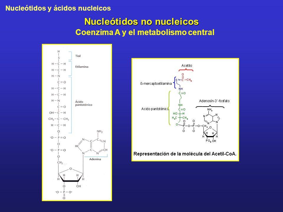 Nucleótidos y ácidos nucleicos Nucleótidos no nucleicos Coenzima A y el metabolismo central