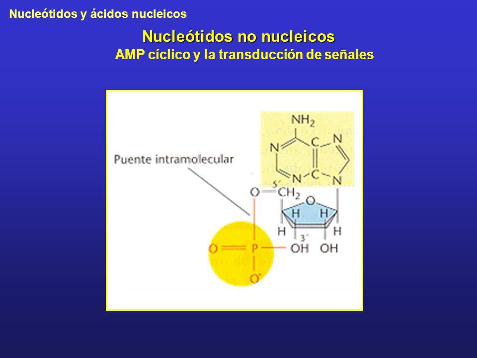 Nucleótidos y ácidos nucleicos Nucleótidos no nucleicos AMP cíclico y la transducción de señales