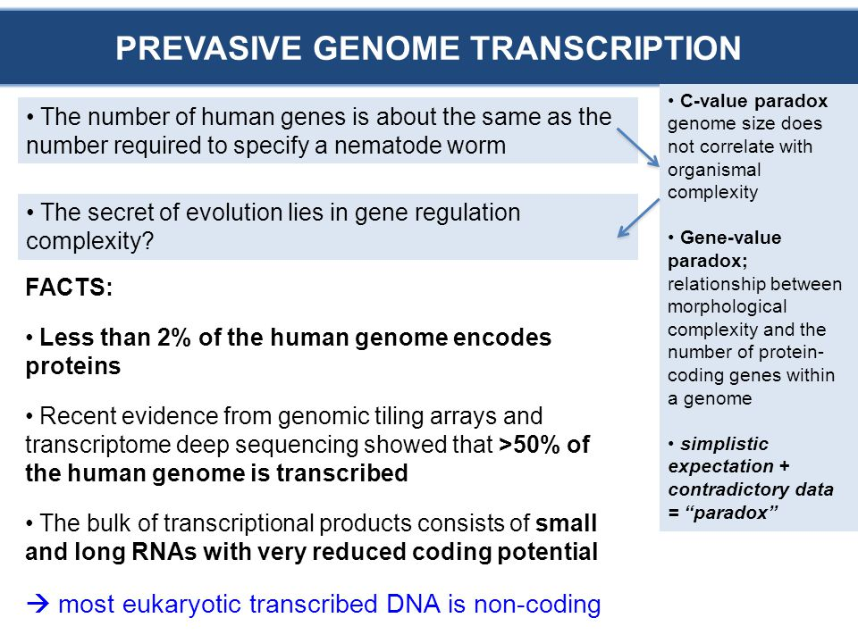 FACTS: Less than 2% of the human genome encodes proteins Recent evidence from genomic tiling arrays and transcriptome deep sequencing showed that >50% of the human genome is transcribed The bulk of transcriptional products consists of small and long RNAs with very reduced coding potential  most eukaryotic transcribed DNA is non-coding PREVASIVE GENOME TRANSCRIPTION C-value paradox genome size does not correlate with organismal complexity Gene-value paradox; relationship between morphological complexity and the number of protein- coding genes within a genome simplistic expectation + contradictory data = paradox The number of human genes is about the same as the number required to specify a nematode worm The secret of evolution lies in gene regulation complexity