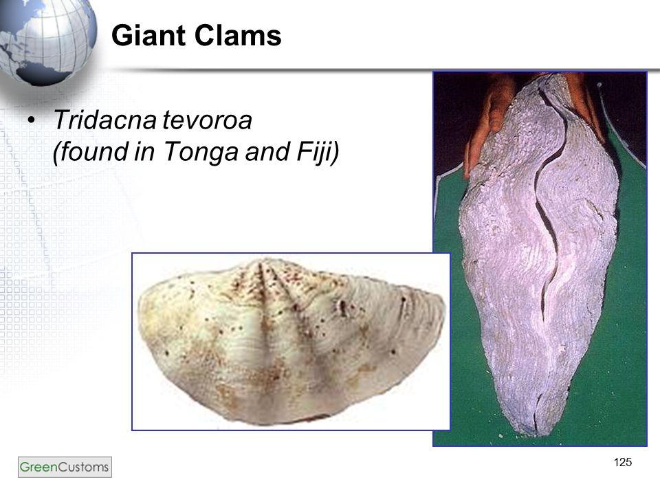 125 Giant Clams Tridacna tevoroa (found in Tonga and Fiji)