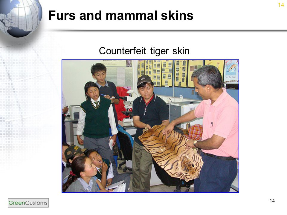 14 Furs and mammal skins Counterfeit tiger skin