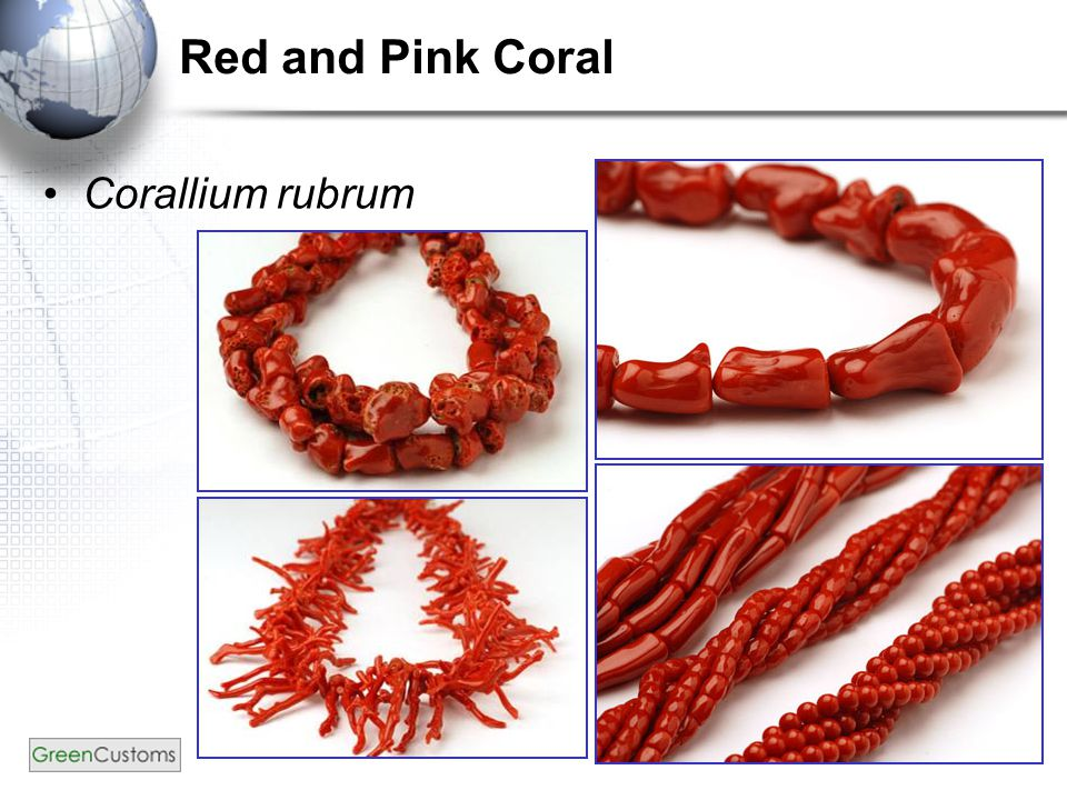 23 Red and Pink Coral Corallium rubrum