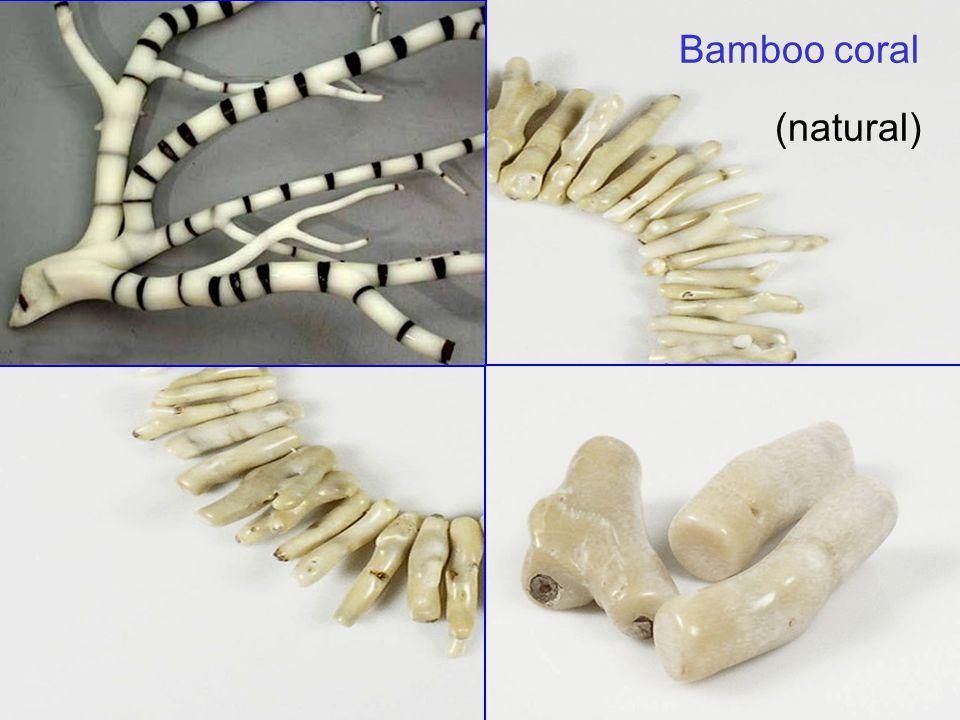 34 Bamboo coral (natural)