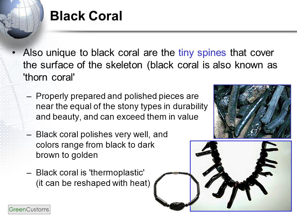 37 Black Coral Also unique to black coral are the tiny spines that cover the surface of the skeleton (black coral is also known as 'thorn coral' –Prop