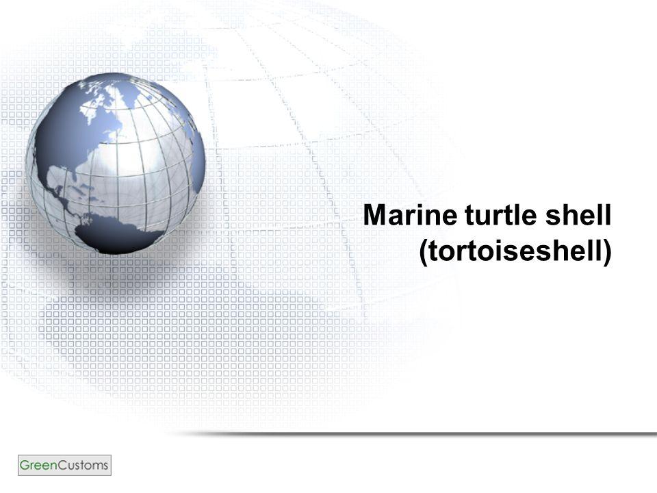 Marine turtle shell (tortoiseshell)