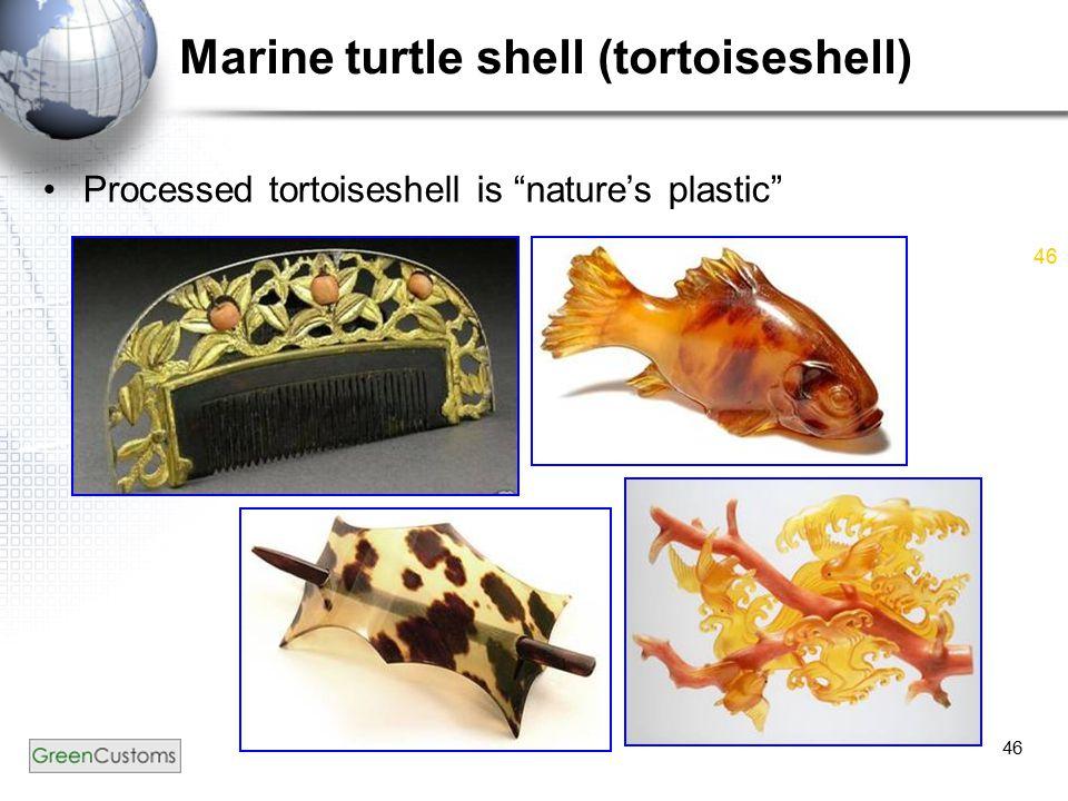 """46 Marine turtle shell (tortoiseshell) Processed tortoiseshell is """"nature's plastic"""""""
