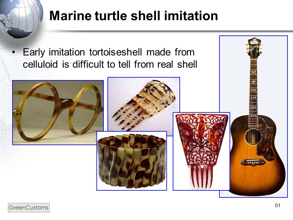 51 Marine turtle shell imitation Early imitation tortoiseshell made from celluloid is difficult to tell from real shell