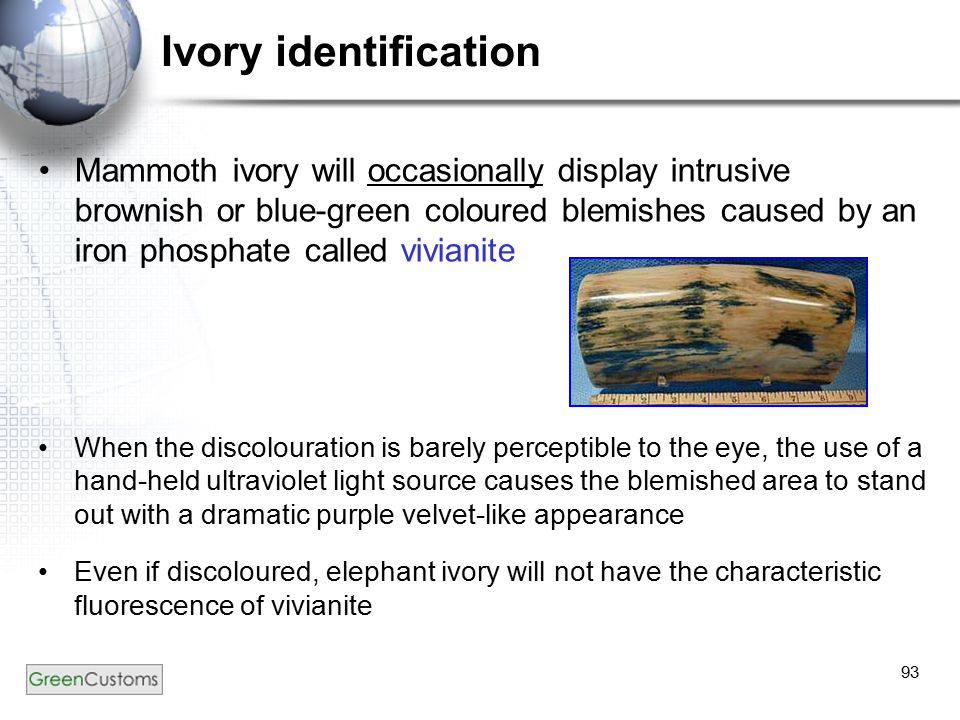 93 Ivory identification Mammoth ivory will occasionally display intrusive brownish or blue-green coloured blemishes caused by an iron phosphate called