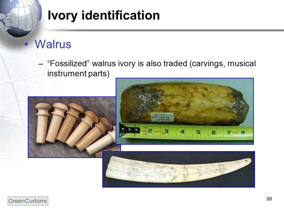 99 Ivory identification Walrus – Fossilized walrus ivory is also traded (carvings, musical instrument parts)