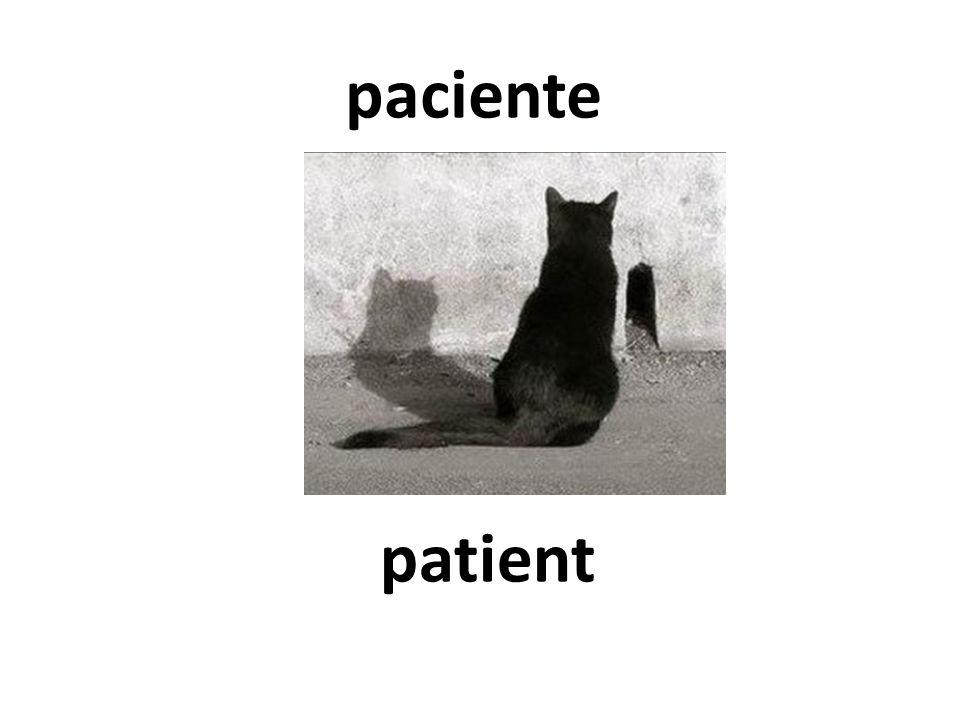 patient paciente