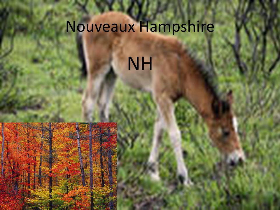 Nouveaux Hampshire NH
