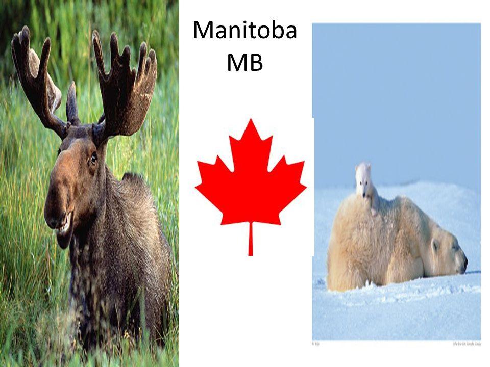 Manitoba MB
