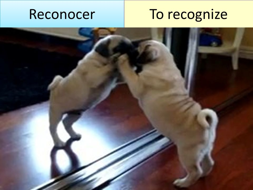 Reconocer To recognize