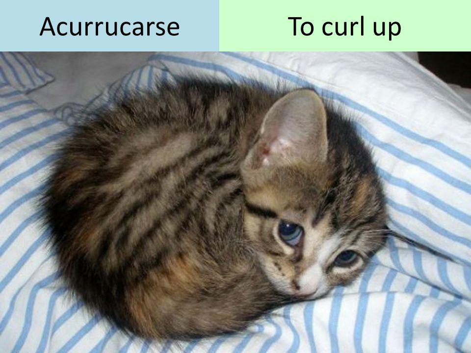 AcurrucarseTo curl up