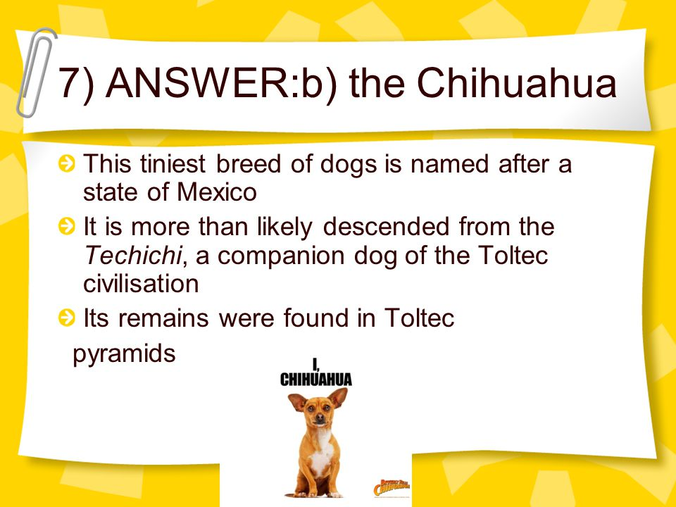 7) ANSWER:b) the Chihuahua This tiniest breed of dogs is named after a state of Mexico It is more than likely descended from the Techichi, a companion dog of the Toltec civilisation Its remains were found in Toltec pyramids