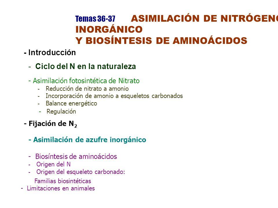 Temas 36-37 ASIMILACIÓN DE NITRÓGENO INORGÁNICO Y BIOSÍNTESIS DE AMINOÁCIDOS - Introducción -Ciclo del N en la naturaleza - Asimilación fotosintética