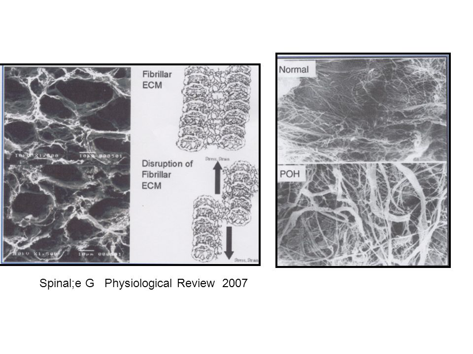 Spinale F, Physiol Rev 2007 Spinal;e G Physiological Review 2007