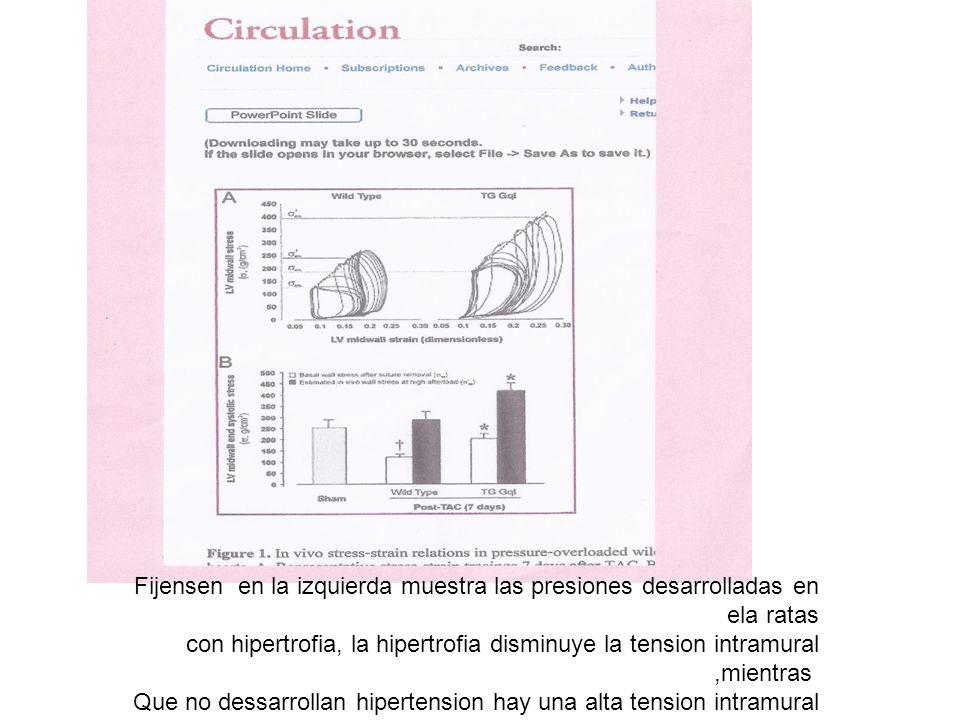 Fijensen en la izquierda muestra las presiones desarrolladas en ela ratas con hipertrofia, la hipertrofia disminuye la tension intramural,mientras Que no dessarrollan hipertension hay una alta tension intramural