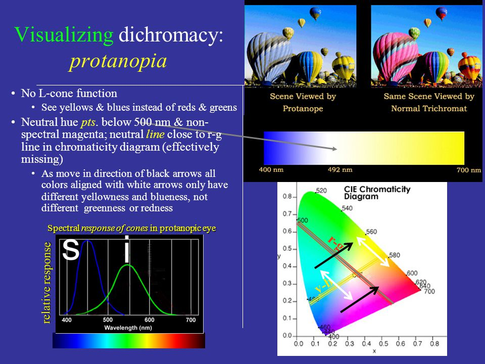 More systematic descriptions of color-blindedness (no need to memorize terminology) Monochromacy (can match any colored light with any 1 spectral light by adjusting intensity) Either has no cones (rod monochromat) or has only 1 of the 3 types of cones working (cone monochromat).