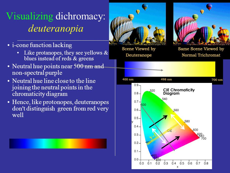 y-b Visualizing dichromacy: protanopia r-g Spectral response of cones in protanopic eye relative response No L-cone function See yellows & blues instead of reds & greens Neutral hue pts.