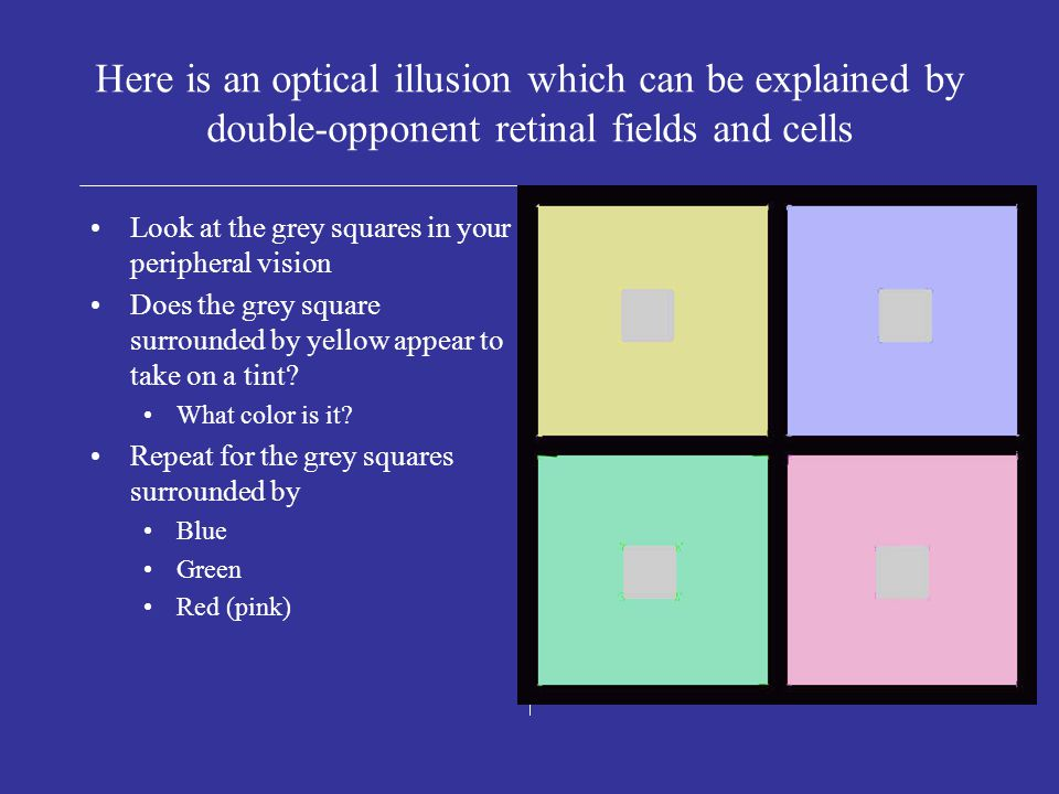 Concept Question: What is the effect of blue light falling on surround of receptive field only.