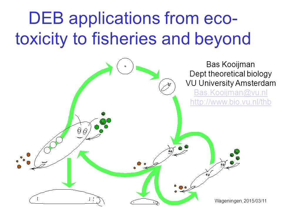 DEB applications from eco- toxicity to fisheries and beyond Bas Kooijman Dept theoretical biology VU University Amsterdam Bas.Kooijman@vu.nl http://ww