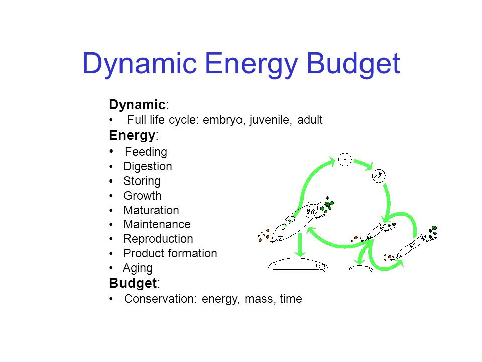 Dynamic Energy Budget Dynamic: Full life cycle: embryo, juvenile, adult Energy: Feeding Digestion Storing Growth Maturation Maintenance Reproduction P