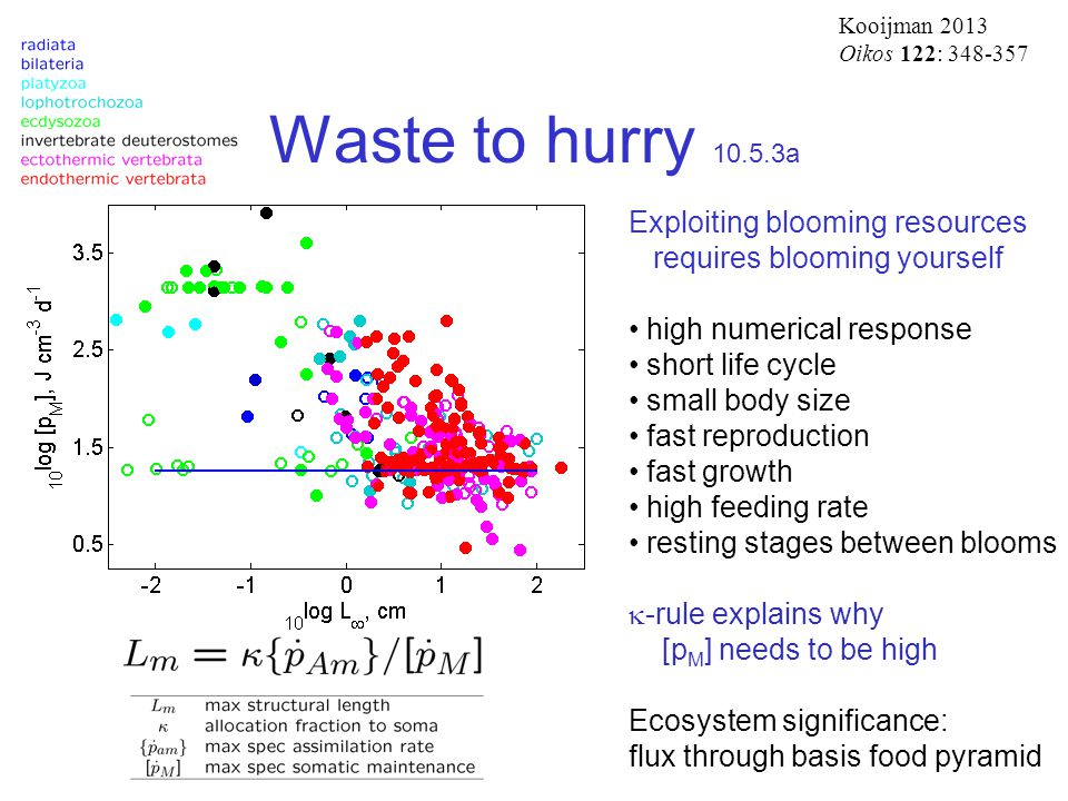 Waste to hurry 10.5.3a Exploiting blooming resources requires blooming yourself high numerical response short life cycle small body size fast reproduction fast growth high feeding rate resting stages between blooms  -rule explains why [p M ] needs to be high Ecosystem significance: flux through basis food pyramid Kooijman 2013 Oikos 122: 348-357