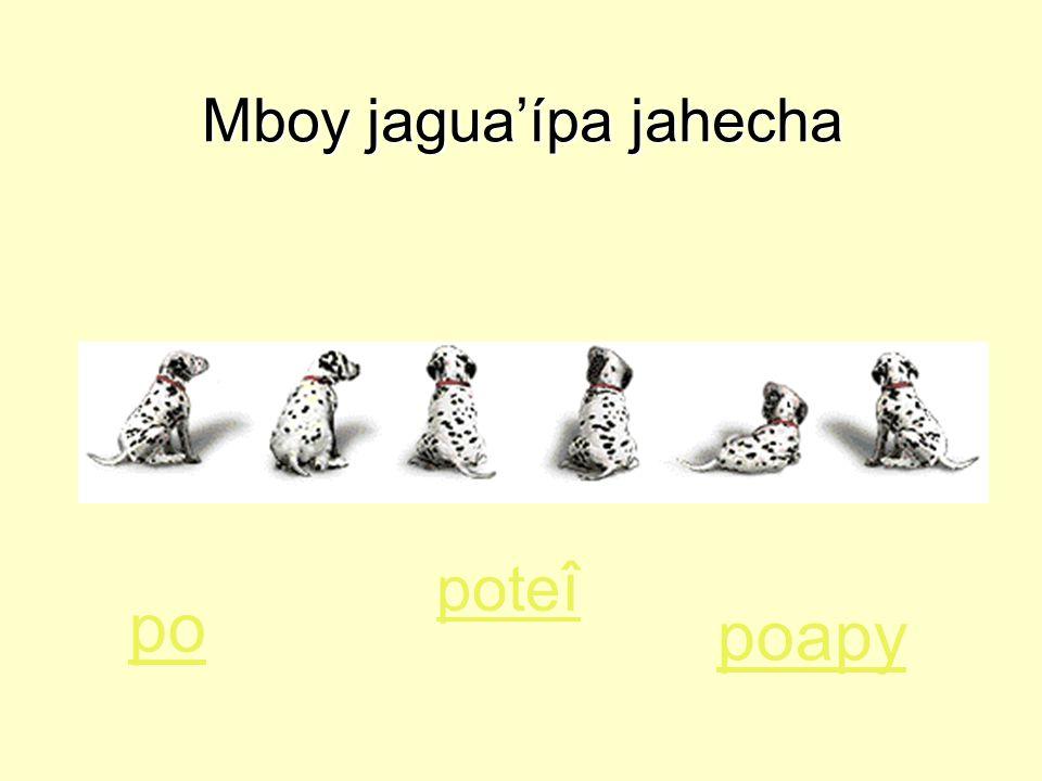 Mboy jagua'ípa jahecha po poapy pote î