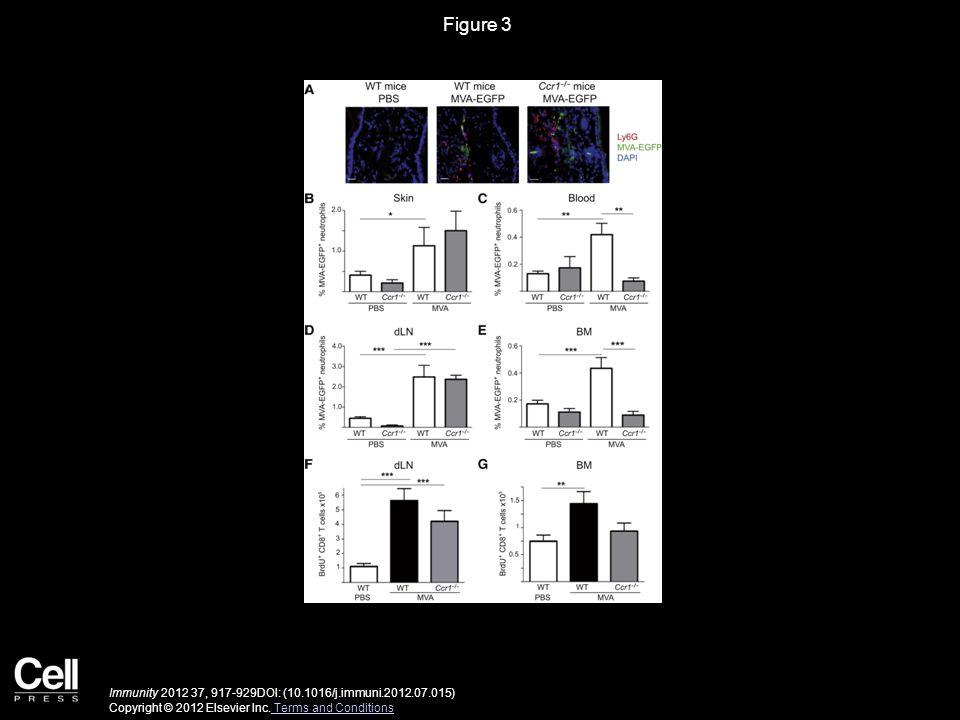 Figure 3 Immunity 2012 37, 917-929DOI: (10.1016/j.immuni.2012.07.015) Copyright © 2012 Elsevier Inc.