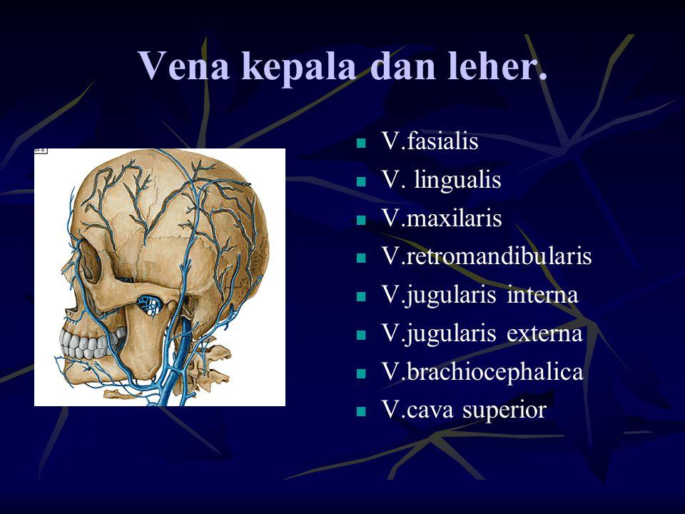Vena kepala dan leher. V.fasialis V. lingualis V.maxilaris V.retromandibularis V.jugularis interna V.jugularis externa V.brachiocephalica V.cava super