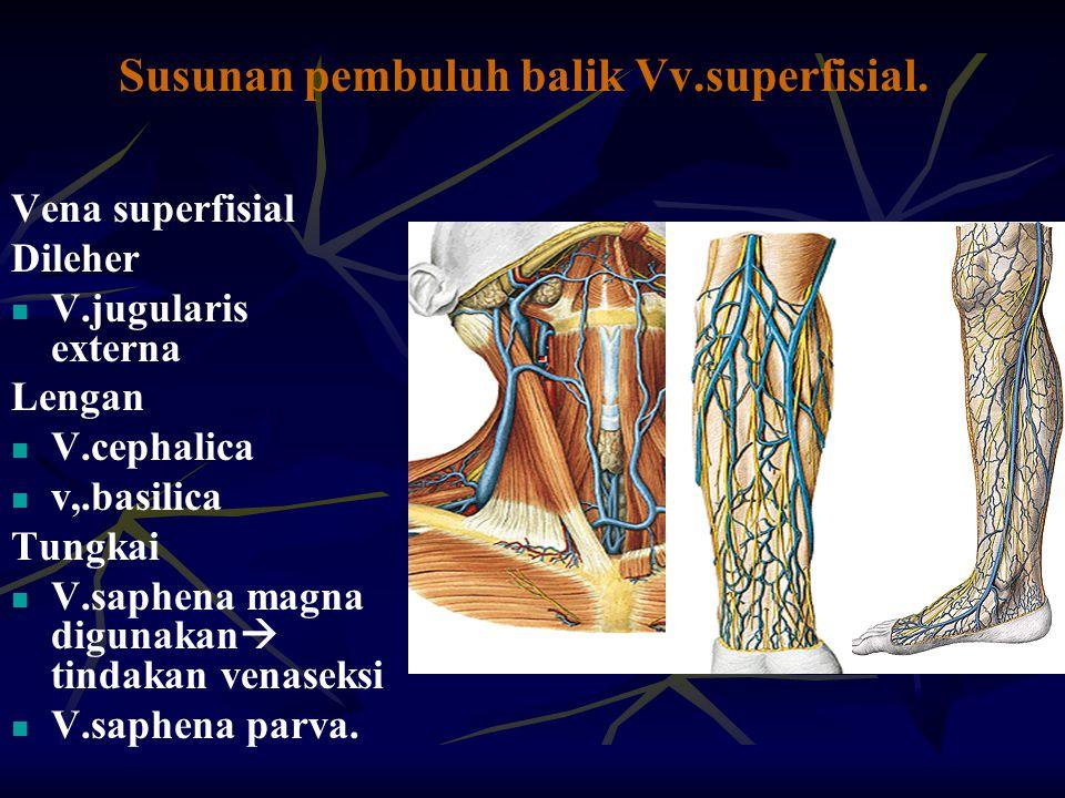 Susunan pembuluh balik Vv.superfisial. Vena superfisial Dileher V.jugularis externa Lengan V.cephalica v,.basilica Tungkai V.saphena magna digunakan 