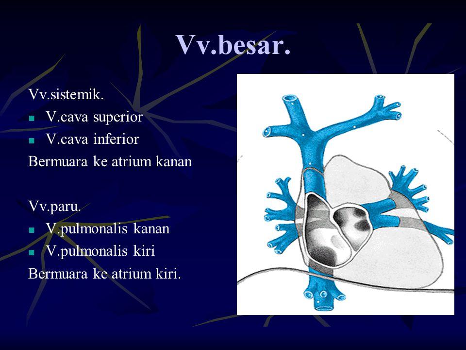 Vv.besar. Vv.sistemik. V.cava superior V.cava inferior Bermuara ke atrium kanan Vv.paru. V.pulmonalis kanan V.pulmonalis kiri Bermuara ke atrium kiri.