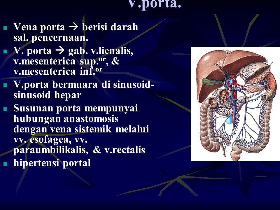 V.porta. Vena porta  berisi darah sal. pencernaan. V. porta  gab. v.lienalis, v.mesenterica sup. or, & v.mesenterica inf. or V.porta bermuara di sin