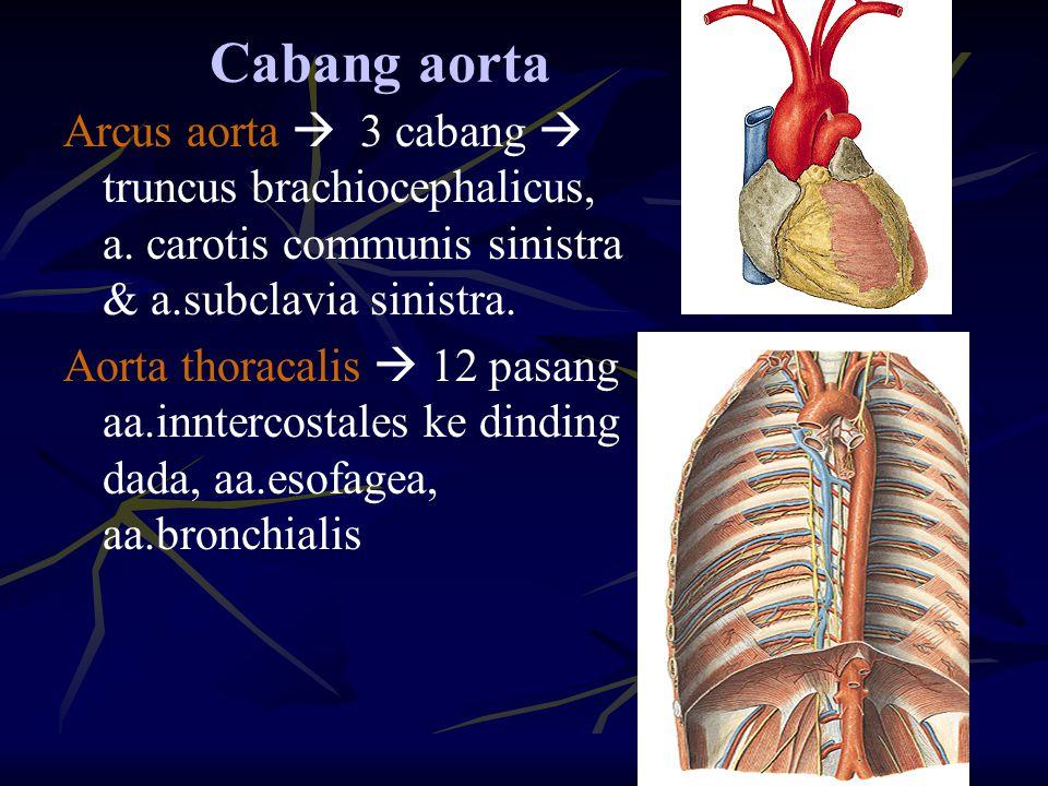 Cabang aorta Arcus aorta  3 cabang  truncus brachiocephalicus, a. carotis communis sinistra & a.subclavia sinistra. Aorta thoracalis  12 pasang aa.