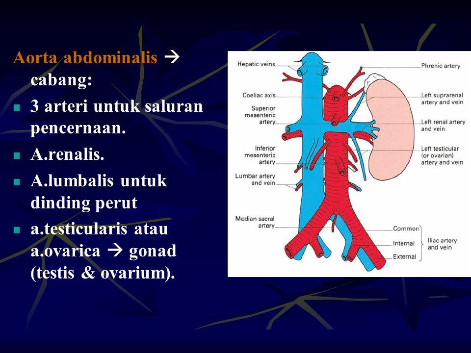 Aorta abdominalis  cabang: 3 arteri untuk saluran pencernaan. A.renalis. A.lumbalis untuk dinding perut a.testicularis atau a.ovarica  gonad (testis