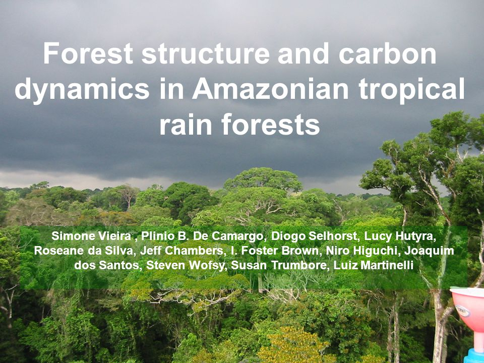Forest structure and carbon dynamics in Amazonian tropical rain forests Simone Vieira, Plinio B.