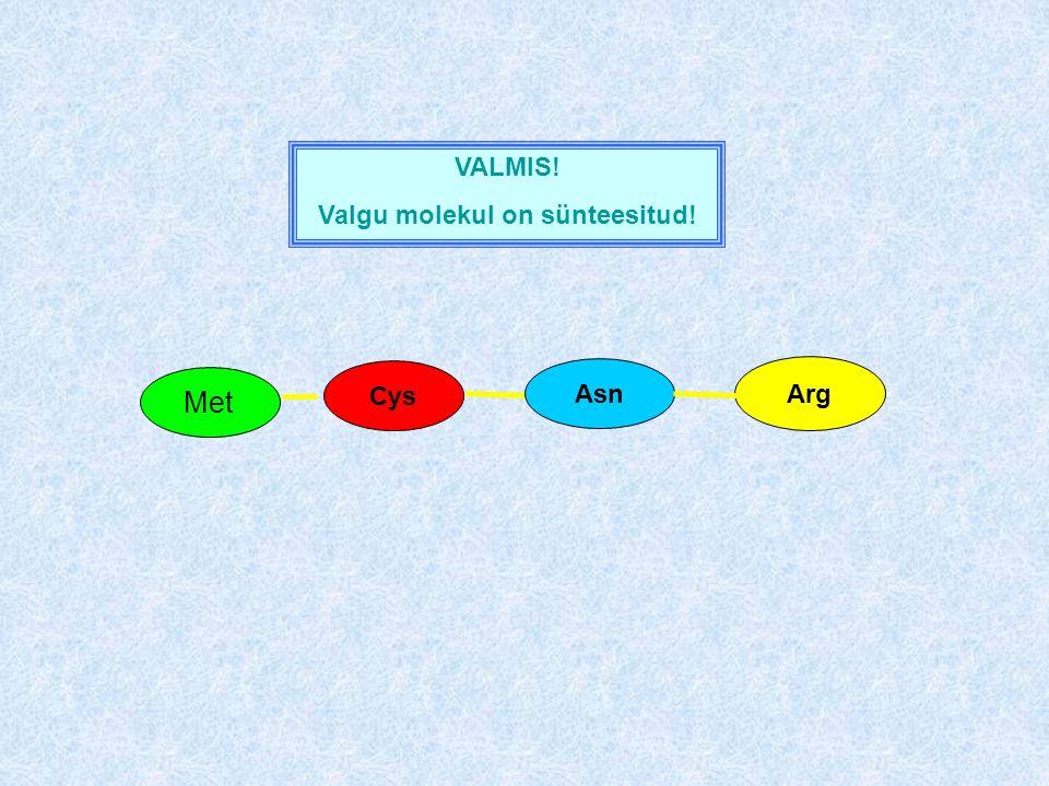 Asn Met Arg Cys VALMIS! Valgu molekul on sünteesitud!